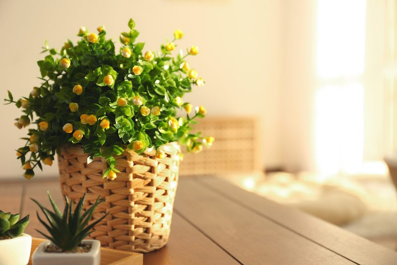 An air conditioner is preventing mold in a sunny room with a basket of flowers.